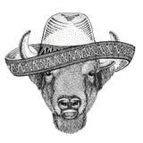 Bizon, żubr, wół, byka dzikie zwierzę jest ubranym sombrero Meksyk fiesta meksykanina przyjęcia ilustracyjnego Dzikiego zachód Obraz Royalty Free