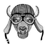 Bizon, żubr, wół, byka ręka rysujący zwierzęcy jest ubranym motocyklu hełm dla koszulki wizerunek, tatuaż, emblemat, odznaka, log Zdjęcie Royalty Free