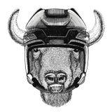 Bizon, żubr, wół, byka wizerunku Hokejowy dzikie zwierzę jest ubranym hokejowego hełma sporta zimy sporta zwierzęcego Hokejowego  Zdjęcia Stock