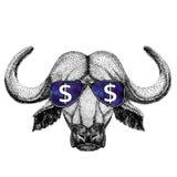 Bizon, byk, wół jest ubranym szkła z dolarowego znaka ilustracją z dzikim zwierzęciem dla koszulki, tatuażu nakreślenie, łata obrazy stock