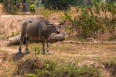Bizon jest życia maszyną rolnik przy kanałem Zdjęcie Stock