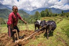 Bizon Nepal i lemiesz zdjęcie royalty free