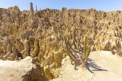 Bizzare de formations géologiques de vallée de lune de cactus, falaises de La Paz Photographie stock libre de droits