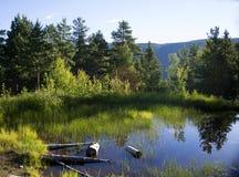 Bjørneparken, Norvège Images libres de droits