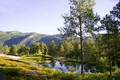 Bjørneparken, Norvège Photo libre de droits