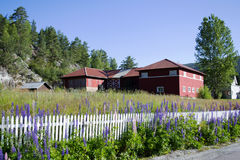 Bjørneparken, Norvège Images stock