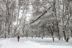 Björk i Park som täckas med snö Arkivbilder