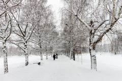 Björk i Park som täckas med snö Fotografering för Bildbyråer