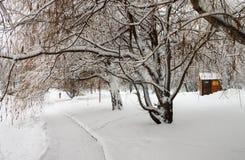 Björk i Park som täckas med snö Arkivbild