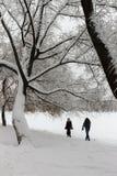 Björk i Park som täckas med snö Arkivfoto