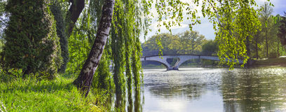Björk och viden som lutar över sjön och den lilla bron b Arkivfoto