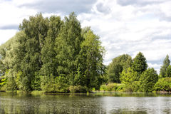 Björk på banken av floder Arkivbilder