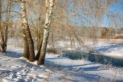 Björk på banken av vinterfloden Arkivfoton
