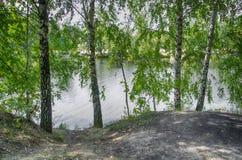 Björk vid vattnet Royaltyfri Fotografi