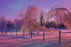 Björkar efter regnar snöslask stormen Royaltyfri Fotografi