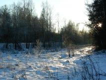 Björkar i entäckt äng med skogen i aftonen Arkivfoton