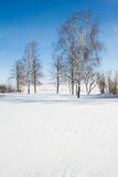 Björkar mot den blåa skyen i vinter Arkivfoton