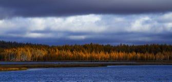 Björkar och sjö Royaltyfri Foto