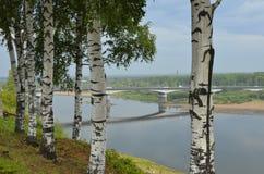 Björkar på bankerna av floden Vyatka Arkivbild