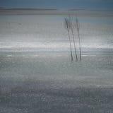 Björkar som en gräns i vattnet Arkivbilder