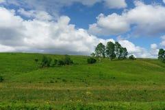 Björkar som växer på en grön kulle Arkivfoto