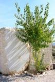 björken blockerar grön marmor murcia spain Arkivbilder