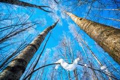 Björken förgrena sig i frost mot himlen arkivfoton