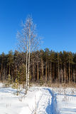 Björken som täckas med skogen för rimfrost- och banavinterdagen, kantar arkivfoton