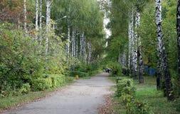 Björkgränd i staden arkivbild