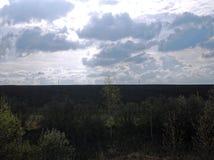 Björklandning på kanten av ett fält i vår Arkivfoton
