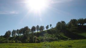 Björkskog på kullen stock video