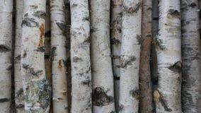 Björkstammar för vedträ, byggande timmer eller garnering Betula Papyrifera naturligt trä för bakgrund arkivfoto