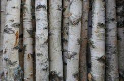 Björkstammar för vedträ, byggande timmer eller garnering Betula Papyrifera naturligt trä för bakgrund royaltyfri foto