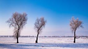 Björkträd i ett kallt vinterlandskap med snö och frost arkivbild
