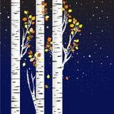 Björkträd i hösten över en stjärnklar natt Arkivfoto