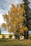 Björkträd i kyrkogård Arkivfoto