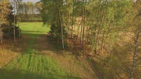 Björkträd i nedgången stock video