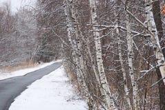 Björkträd lutar in mot går vägen på en grå dag i Februari Arkivfoto