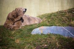 björn Fotografering för Bildbyråer