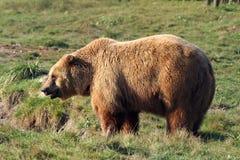 björn Arkivfoton