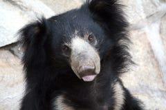 björn Arkivbilder