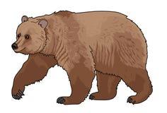 Björn djur Arkivfoton