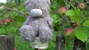 Björn för nalle Abandonded för flott leksak som grå sitter på landsstaketet för gammal stil, ensamhetbegrepp, minnen av barndom stock video