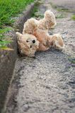 björn förlorad nalle Arkivfoton