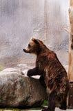 Björn i en zoo Royaltyfri Fotografi