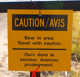 Björn i område Arkivfoton