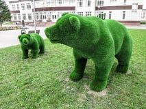 Björn med en gröngöling Royaltyfri Bild