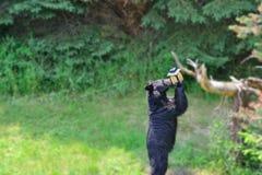 Björn på fågelförlagemataren royaltyfri fotografi