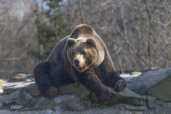 Björn på vagga Royaltyfri Fotografi