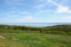 Björn sjön förbiser panorama Arkivbild